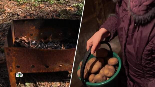 Без шашлыков и картошки: кто превращает жизнь дачника в ад