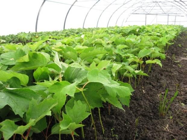 Регуляторы роста растений – виды, описание и инструкция по применению