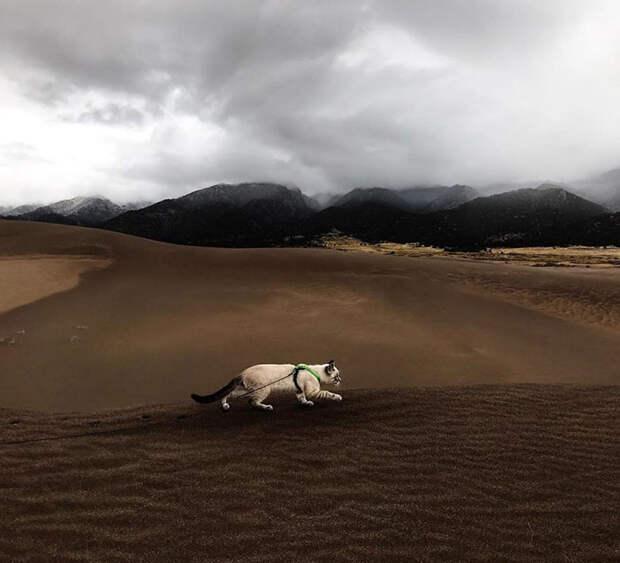 Фотографии кота и собаки, которые путешествуют по самым красивым местам Планеты