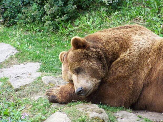 В Сети появилось видео расстрела спящего медведя главой Иркутской области