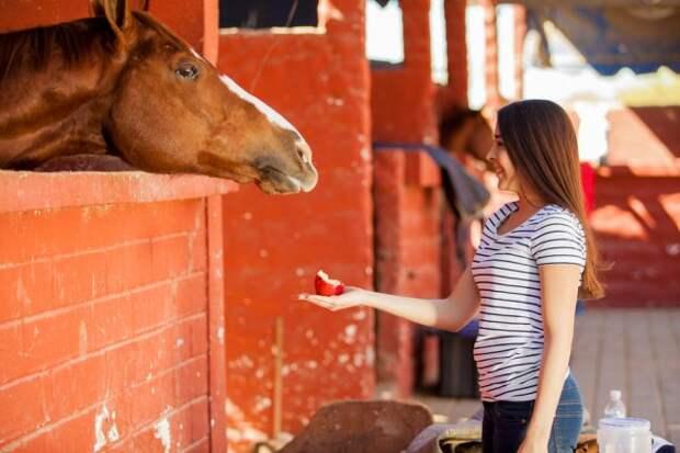 Угощение для лошади