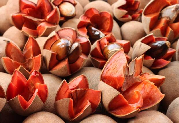Какие фрукты, шоколад и какао покупать в Доминиканской республике?