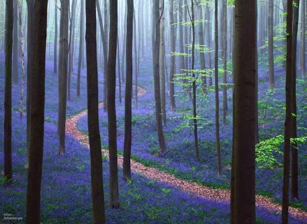 7 самых необыкновенных лесов на Земле