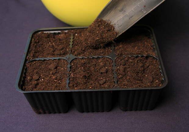 3 способа посева семян петунии