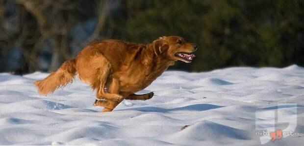Охотничья собака. CC0
