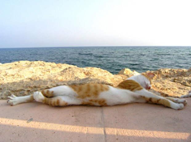 Как защитить кошку летом от жары