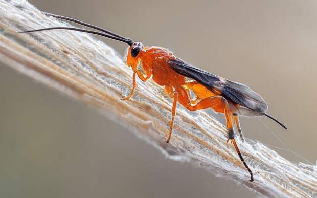 Бракон: Каких насекомых точно не стоит убивать?