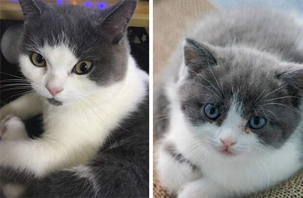 Кот-оригинал (слева) и котенок-копия по имени Чеснок (справа)