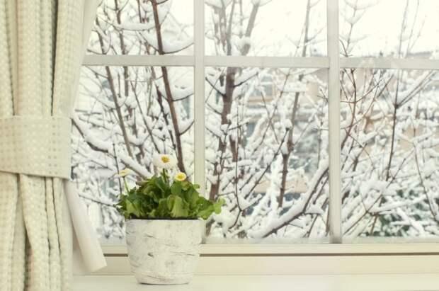Освещение растений зимой