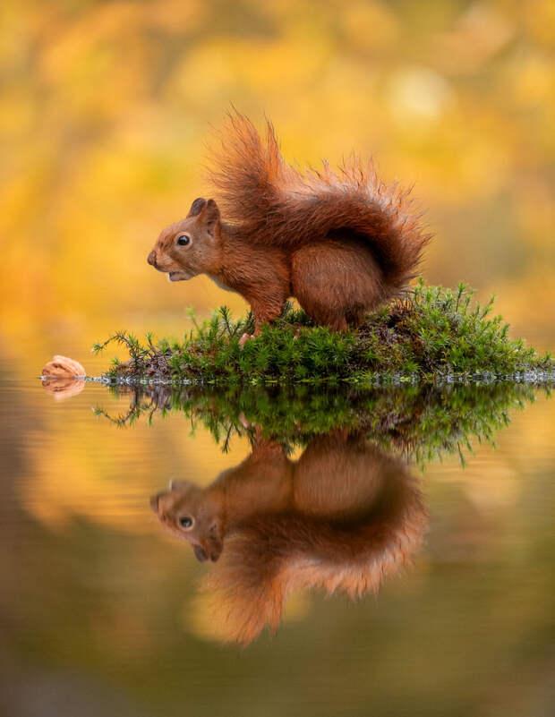 Фотограф потратил часы, чтобы заснять белок над озером