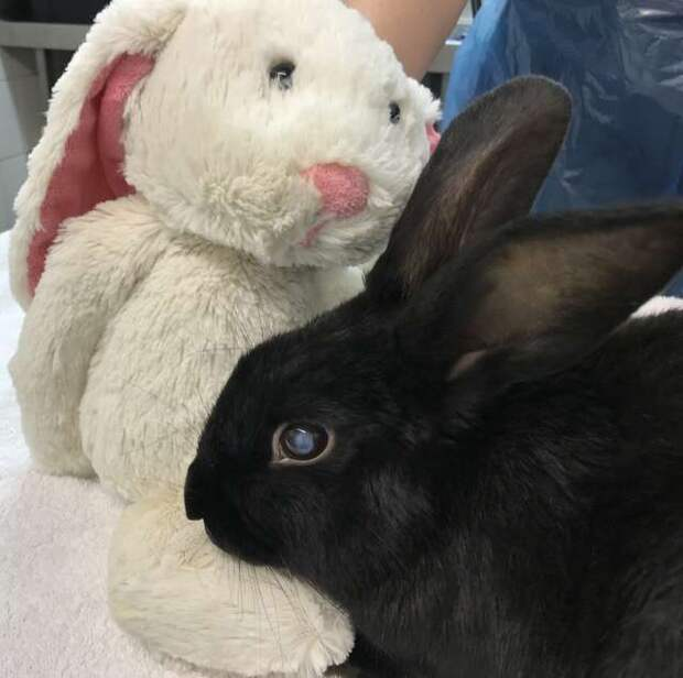 кролик с игрушкой
