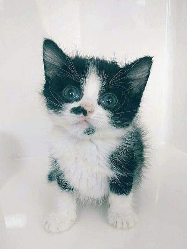 Люди подарили любовь и ласку обреченному котенку с пороком сердца и он вырос в красивую кошку