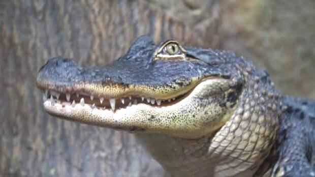 В Ялте затопило крокодиляриум: рептилии обрели свободу. Видео
