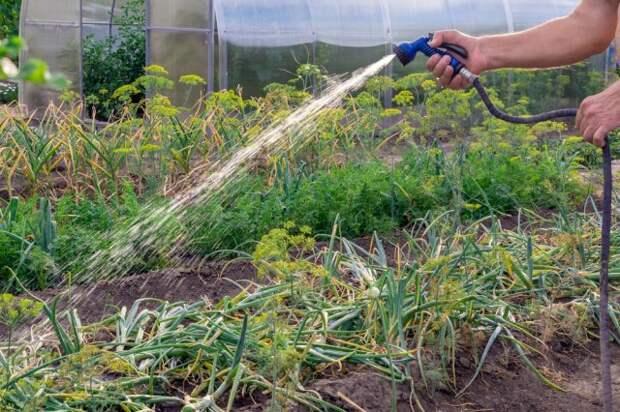 Лунный календарь огородника на 2021 год полив зелени