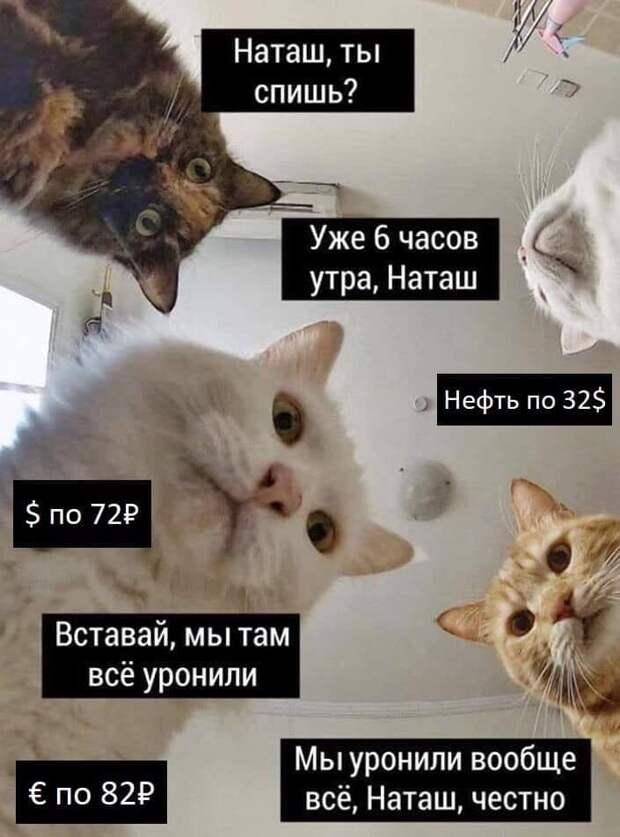 Наташа и её коты. Откуда появился этот знаменитый мем