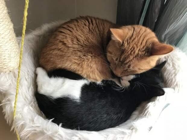 Парень спас маленького котенка и собирался пристроить в добрые руки, но кот из его дома помешал