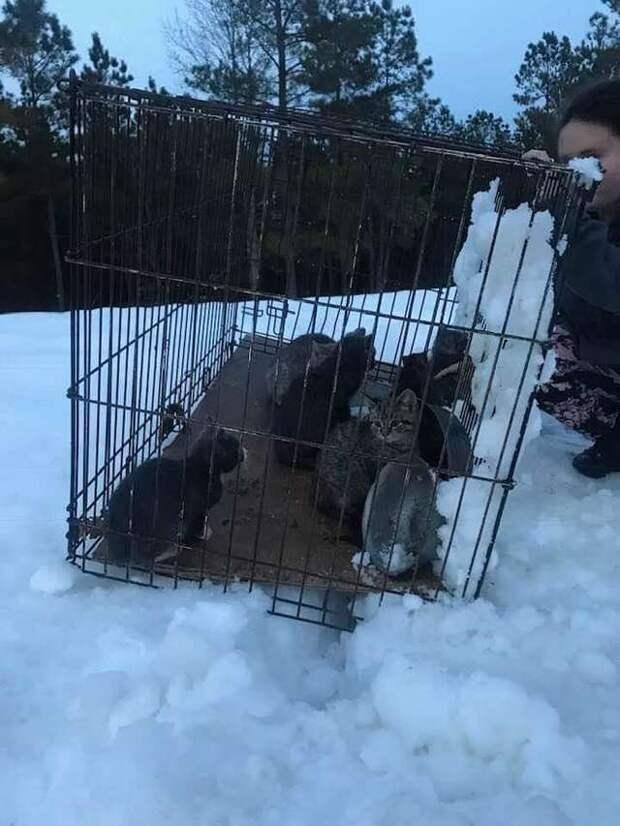 Четверо котят уже не двигались, лежа в снегу! А рядом стоял металлический ящик с другими «пленниками»…