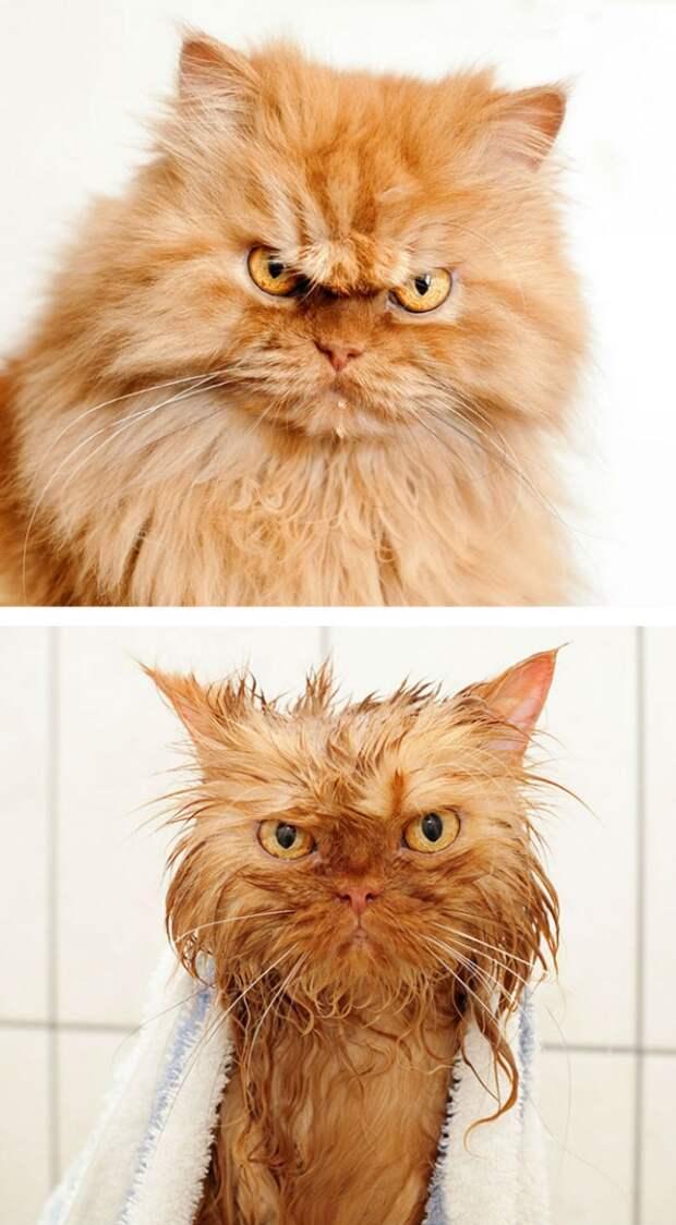 15 уморительных фотографий о том, как животные ненавидят мыться