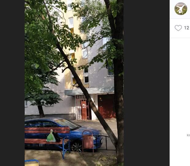 Во дворе на Подольской спилили угрожавшее рухнуть дерево