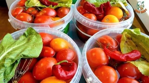 Квашеные помидоры с сахаром. Можно сразу на стол, а можно оставить на зиму