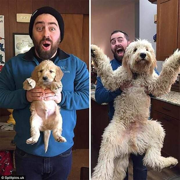 """Когда я был щенком: очаровательные фото собак """"до и после"""" до и после, мимиметр, питомцы, подборка, собаки, тогда и сейчас, фото, щенки"""