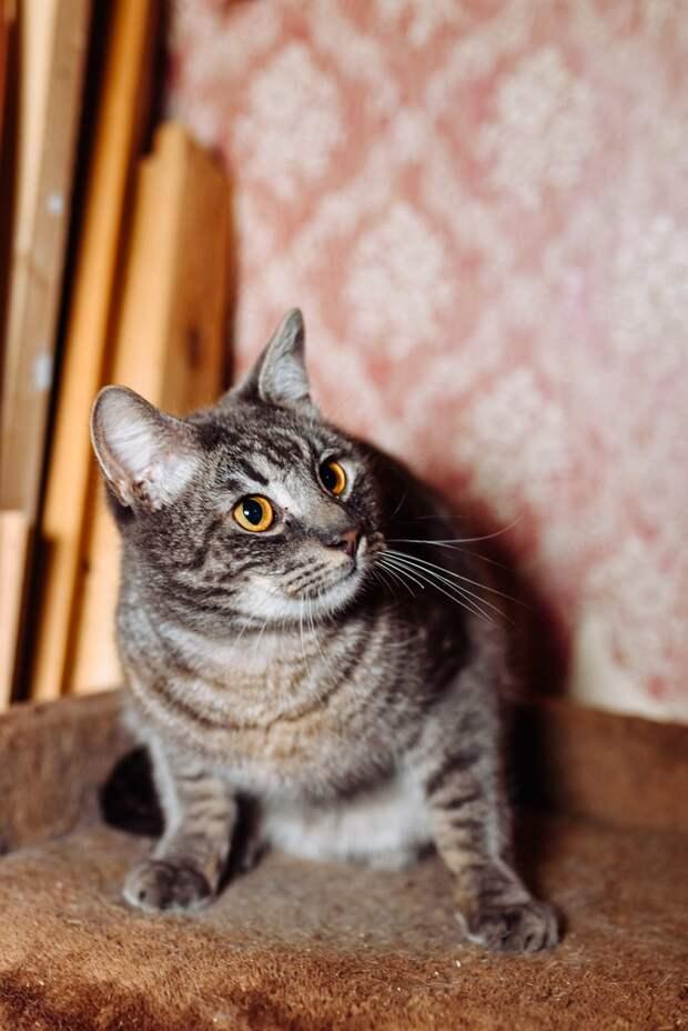 Это не кот. Это шедевр! Торопитесь, перфекционисты!