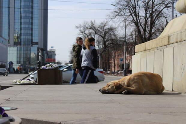 Кубань вошла в антирейтинг регионов России из-за бродячих собак