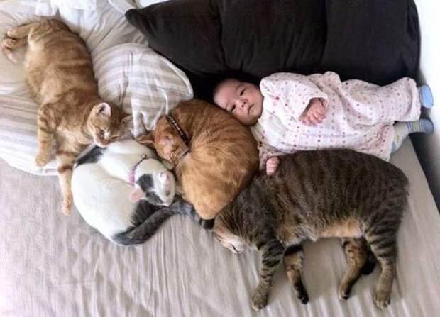 дети и коты, ребёнок и кот, kids with cats