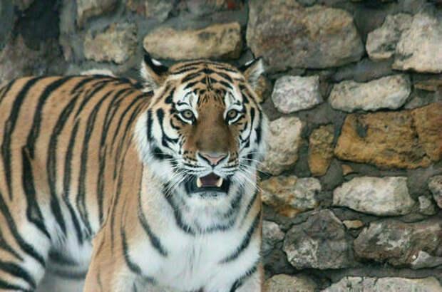 Минприроды предлагает узаконить понятие «дикие животные в неволе»