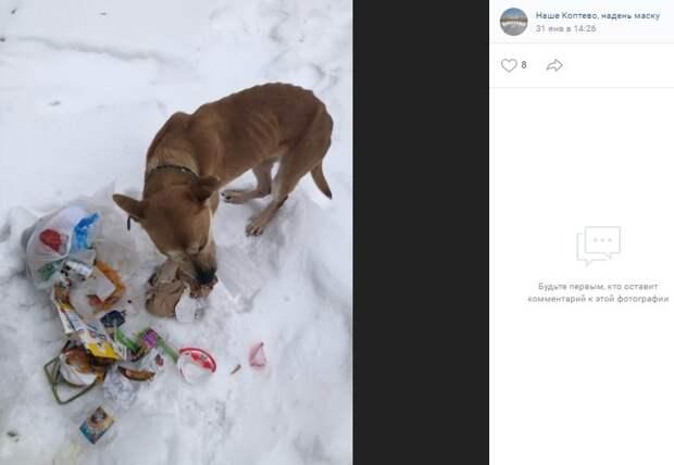 Истощенная собака сбежала от пьяного гитариста на Коптевской
