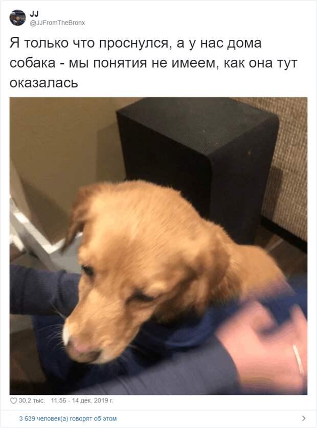Мужчина утром в доме обнаружил бездомную собаку