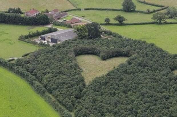 Фермер после смерти жены высадил 6 000 дубов. Смотрите, что потом получилось.