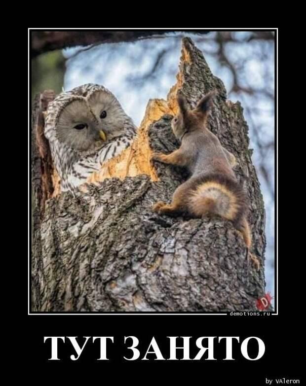 Demotions.ru - ДЕМОТИВАТОРЫ. » Страница 368