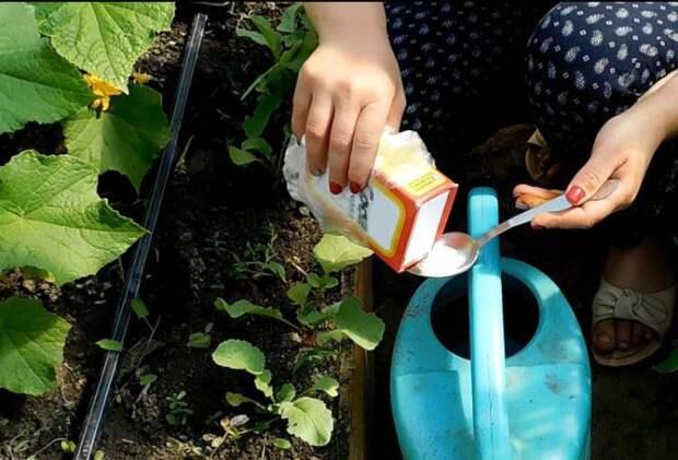 Можно поливать так почти все растения. /Фото: eda-land.ru.