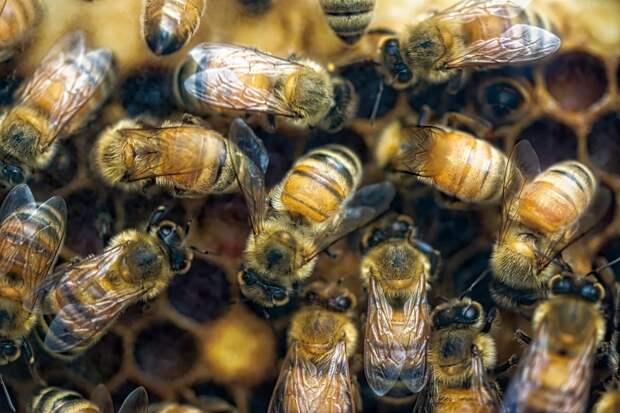 В Удмуртии погибло более 400 пчелосемей