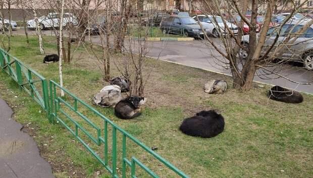 Двух безнадзорных собак отловили на Тепличной улице в Подольске