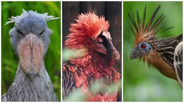 Рогатый ворон и очковая гага: топ самых странных и чудаковатых птиц нашей планеты