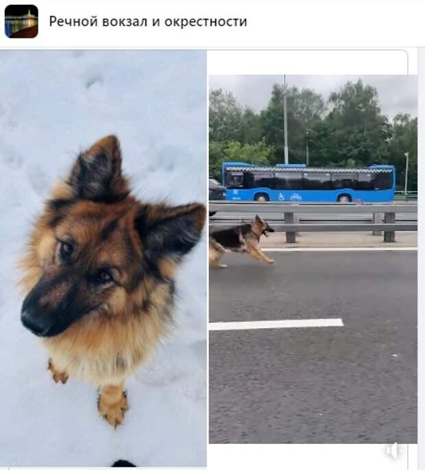 Собака-путешественница с Ленинградского шоссе вернулась домой