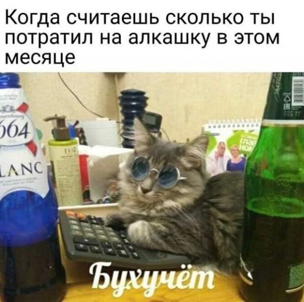 Приколы и мемы про алкоголь (15 фото)