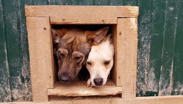 Благотворительная акция помощи приюту для животных идет в гипермаркете Подольска