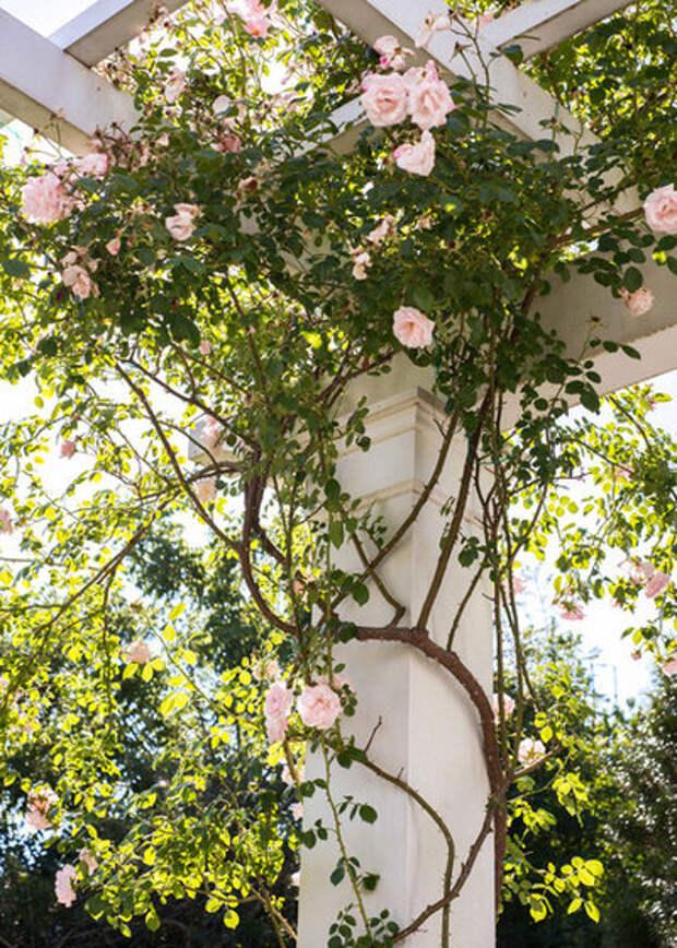 Классический Сад by Kimberly Mercurio Landscape Architecture