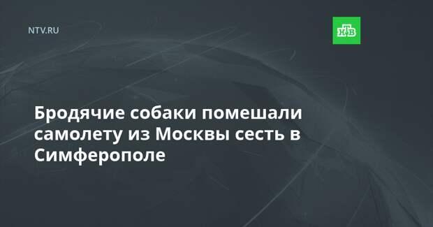 Бродячие собаки помешали самолету из Москвы сесть в Симферополе
