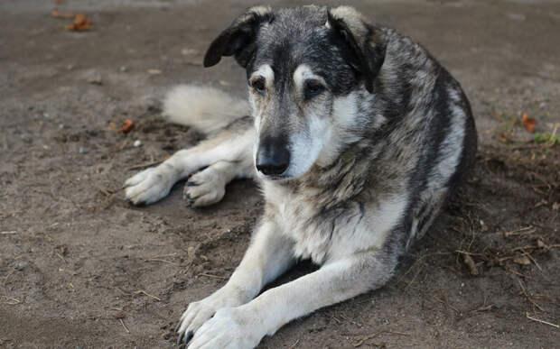 Несмотря на то, что рано или поздно трудности возникнут у любой собаки, можно отсрочить их появление, вовремя приняв профилактические меры. Фото Admiral_Lebioda/Pixabay