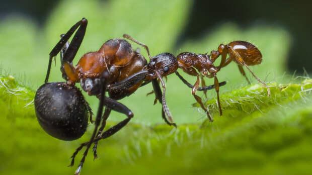 В США муравьев и мотыльков переименуют в целях борьбы с расизмом