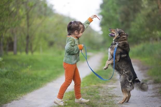 Собаки очень ревнивые: как это проявляется