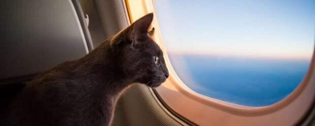 Поганый «Аэрофлот» засветился в новом скандале с котиками: на этот раз история очень трагичная