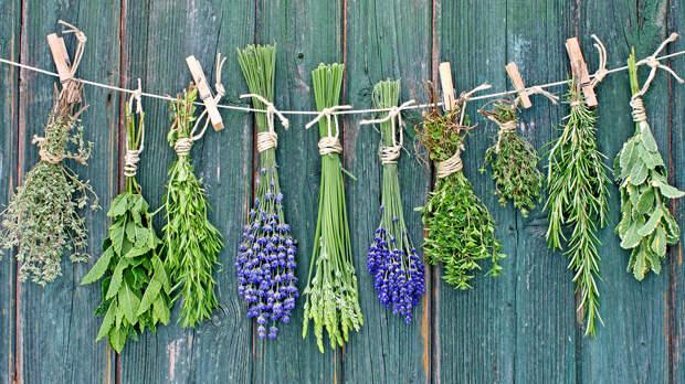 Календарь сбора целебных трав