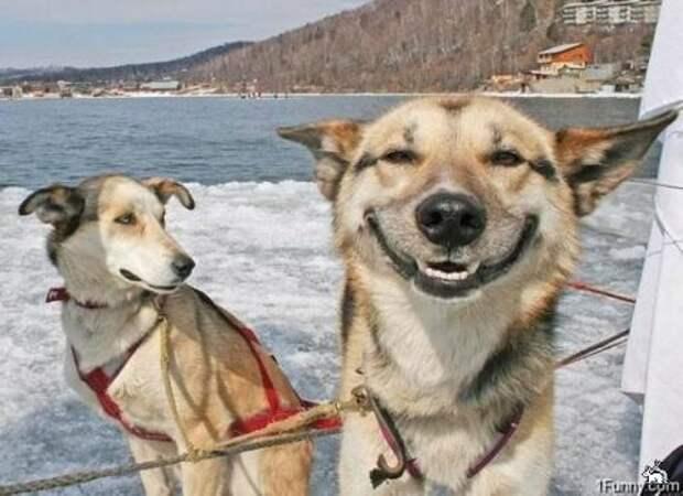 Неприлично счастливые животные