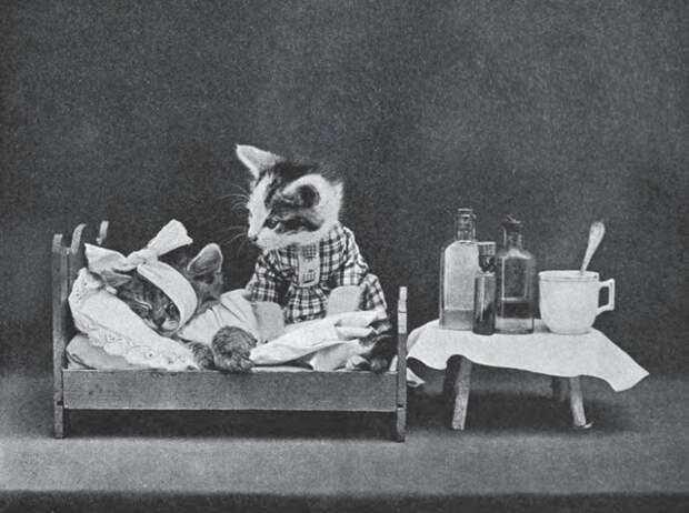 LOLcats: Смешные коты Гарри Уиттера