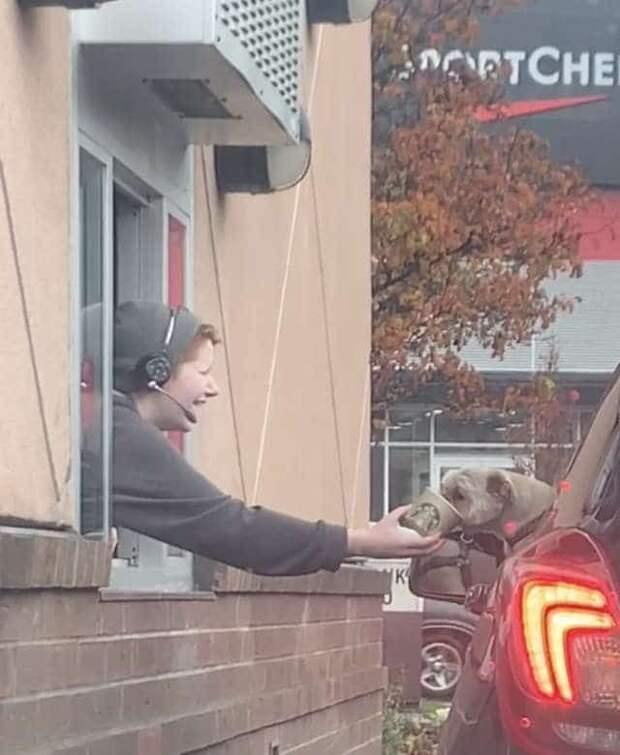 Пес высунулся из окна машины и с нетерпением ждал, пока ему принесут что-то очень вкусное!